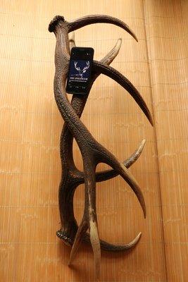 (已出純展示) DeerLife歐洲自然脫落鹿角擺件 102cm天然裝置藝術 頂級傢具家具 居家裝飾品 藝術素材