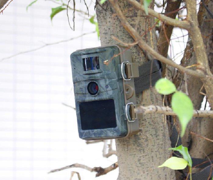 呈現攝影-Redleaf RD1005 紅葉自動獵蹤相機 中文介界 夜視 1080P 防水 感應拍攝 隱藏相機 觀察