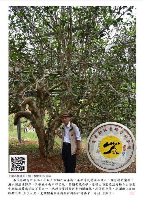 吻潤2017曼糯古樹茶普洱茶250公克黃金餅茶限量分享