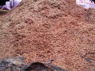 【油香世家】【出清感謝價】山材牛樟純根沉油100ml下標區 正統檳榔味 無沙士味  黃檜 扁柏 檜木精油