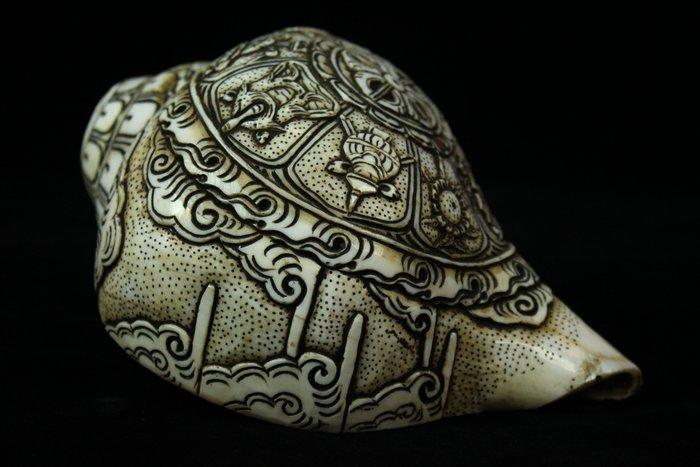 悅年堂 --- 法螺 貝殼