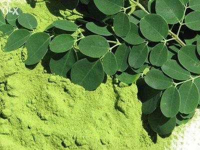 印度辣木優惠組《辣木葉粉大包x1加辣木籽大包x1》也有椰子油,生酮飲食可以用