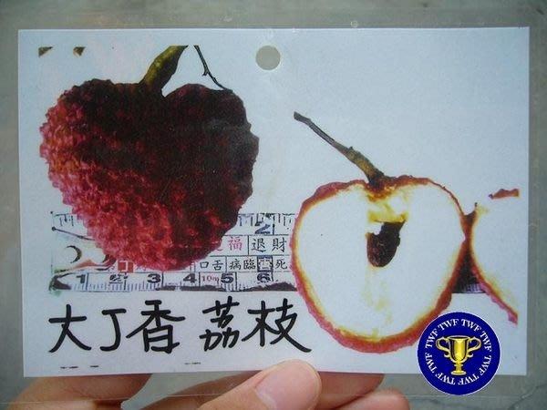 ╭*田尾玫瑰園*╯新品種水果苗--(大丁香荔枝)