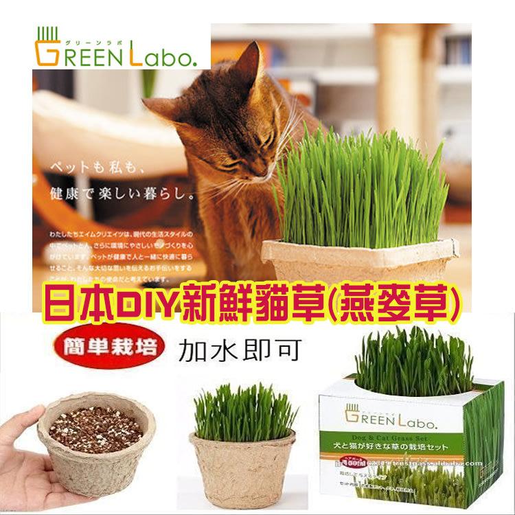 日本GreenLabo 新鮮燕麥DIY貓草盆/有機食材/貓草種植 貓草栽培(貓狗都可吃)