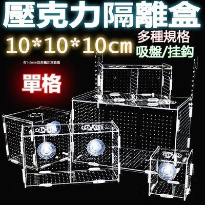 單格10x10x10cm超透亞克力隔離盒【掛勾/吸盤款 任選】壓克力繁殖盒、壓克力隔離盒、壓克力拍照盒孵化魚缸可參考