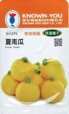 四季園 夏南瓜 Summer Squash (sv-275) 黃球狀 【蔬果種子】農友種苗特選種子 每包約10粒