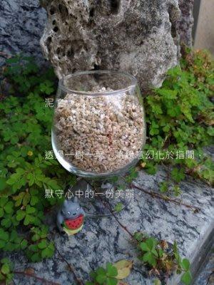 【泥龜 ☘️ 蛭石 3L】多肉植物 仙人掌 水耕 育苗 阡插 生根 介質 盆栽 園藝 資材