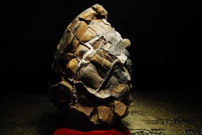 埔里   山採   黃龜甲石
