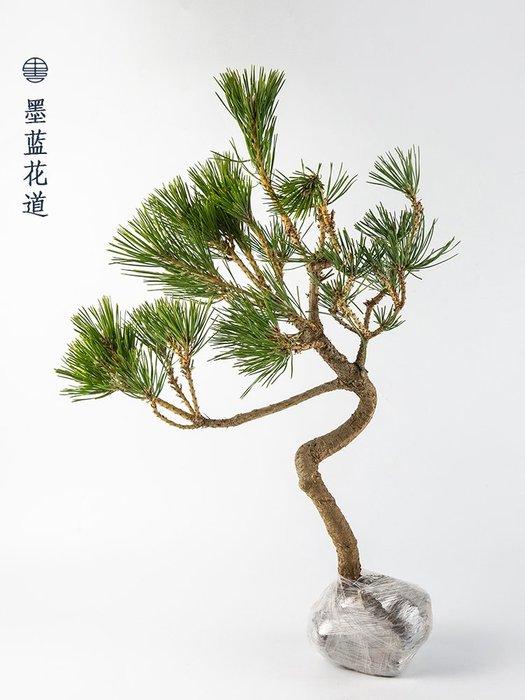 松花藝藝 術插花裝 飾綠植中 式日式花 道插花花 材小原流 池坊草月 流