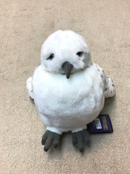 哈利波特 白貓頭鷹
