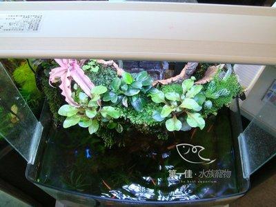 [第一佳•水族寵物]專業海水缸 大型缸 大型壓克力缸 海鮮餐廳魚缸 招財風水缸 水草造景服務 岩板 流沙 瀑布