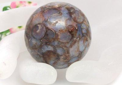 【柴鋪二館】至純老礦海螺化石法螺天珠 極品貢珠(編號14)