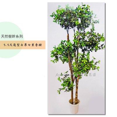 【☆芳馨花園☆】人造樹~5.5尺造型白果七里香樹[F05287]-自然風格,景觀造景 園藝布置