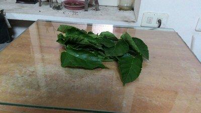 桑葉一包25元100公克 (蠶寶寶的糧食、水晶蝦的新鮮食物)