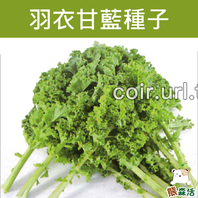 ~全館滿790免運~羽衣甘藍種子 Kale【熊森活】