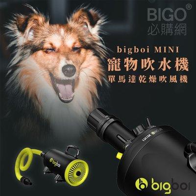 【澳洲進口】bigboi MINI 寵物單馬達吹風機 低噪音 寵物吹水機 吹風機 汽機車可用 寵物 兩段溫控 現貨