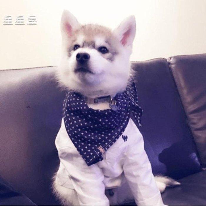 狗狗口水巾三角巾大型犬拉布拉多金毛法斗?摩耶?兜方巾?物?巾