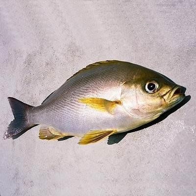 【澎湖黃雞仔魚(雞仔魚)-約2斤/組】新鮮魚貨乾淨處理產地直送(秤重計價)-2501003