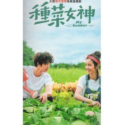 現代電視劇種菜女神DVD碟片光盤全集完整版劉以豪陳庭妮 精美盒裝