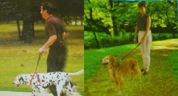 ~e世代~中及大型犬狗用狗鏈超粗不銹鋼圈狗鍊防爆衝訓練狗牽繩帶拉繩牽引繩套組寵物狗鍊