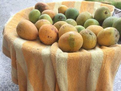 農園自產 無化學熟成 芒果 風味獨特 五斤/10斤裝