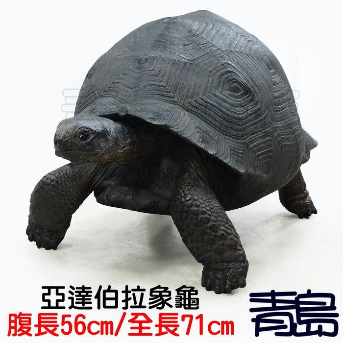 YU。。。青島水族。。。TQ-11手工原創 仿真陸龜模型 3D擬真模型 陸龜公仔==巨大亞達伯拉象龜