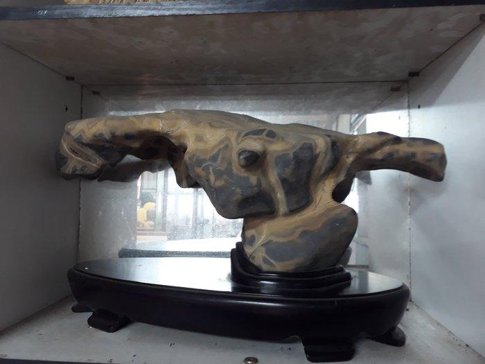 大懸崖印尼黃龜甲長53公分寬17公分重14公斤
