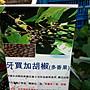 花花世界_香草【牙買加胡椒】5吋盆/ 10cm/ 多...