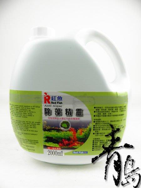 P。。。青島水族。。。台灣Red Fish紅魚---除藻精靈(強力推薦)==2L(買2送1)免運費