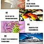 (4包超取免運/8包免運)(含稅獅王hp epson印表機適用 A4亮面防水 相片紙 100張 照片紙 / 相紙 噴墨紙