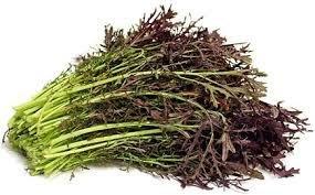 Red Mustard小家庭單身種菜首選可播種 20天即可採收種子100粒