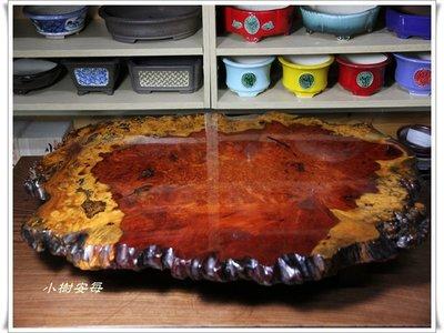 【小樹安每】日本進口- 花梨瘤木地板几桌 (花梨葡萄杢地板)