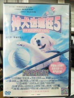 影音大批發-Y58-008-二手DVD-電影【神犬也瘋狂5】-辛西亞史蒂文生 傑克史密斯 凱洽皮珮