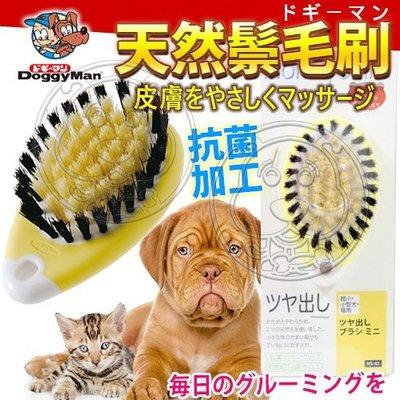 【🐱🐶培菓寵物48H出貨🐰🐹】日本DoggyMan》HS-41犬貓用迷你清潔柔亮天然鬃毛刷 特價330元