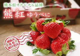 """草莓族""""日本草莓種子/日本熊本ゆうべに草莓王/10粒入種子"""