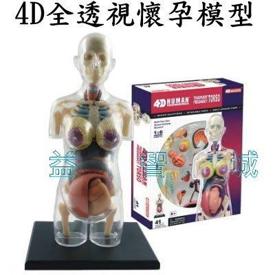 益智城《懷孕模型/教學人體模型/人體器官模型/DIY模型/子宮模型/科學教具/4D MASTER 》4D全透視懷孕模型
