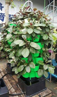 *橫空出世*革命性立體植栽花盆,蔬菜塔...