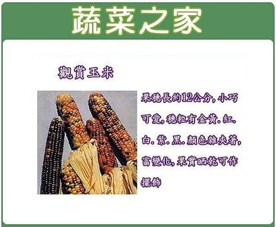 【蔬菜之家】P04.觀賞玉米種子5顆(...
