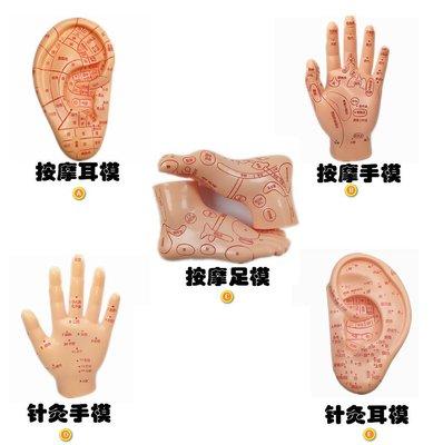 人體穴位教學模型 手部按摩反射區教學模型足部耳穴針灸模型_☆優購好SoGood☆