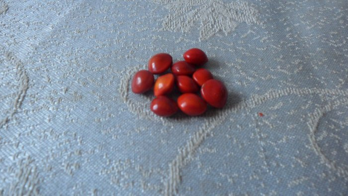 紫色小館-----相思豆