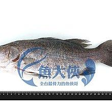 B1【魚大俠】FH180台灣三去金目鱸魚(400g/尾)
