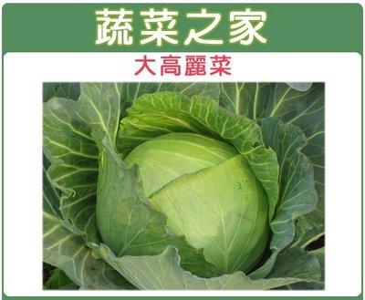 全館滿799免運【蔬菜之家00B08】大包裝.大高麗菜種子種子5克※此商品運費請選宅配※