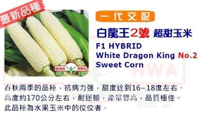 白龍王水果玉米種子100粒100元