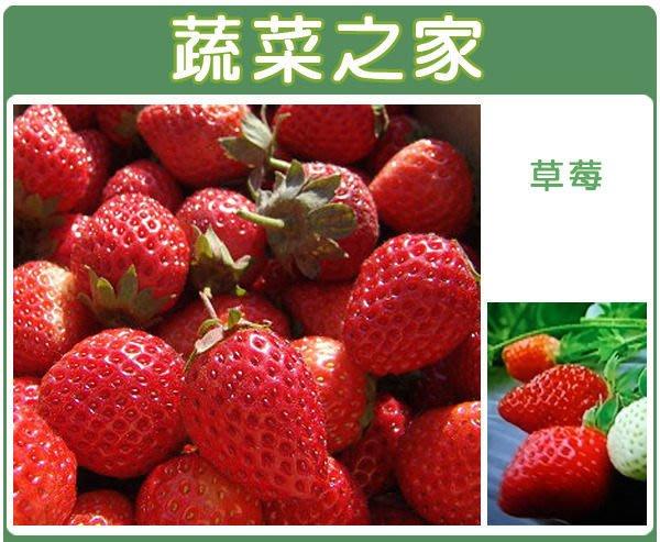 【蔬菜之家】I05.草莓種子20顆(阿里巴巴.蔬菜種子)