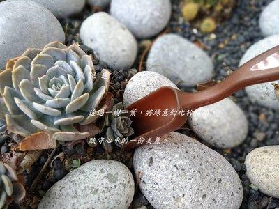 【泥龜 ☘️ 鏟土勺】多肉工具 鋪面 多肉植物 仙人掌 盆栽 砂鏟 土勺 鏟子 茶勺 微景觀 DIY 園藝 工具 用具