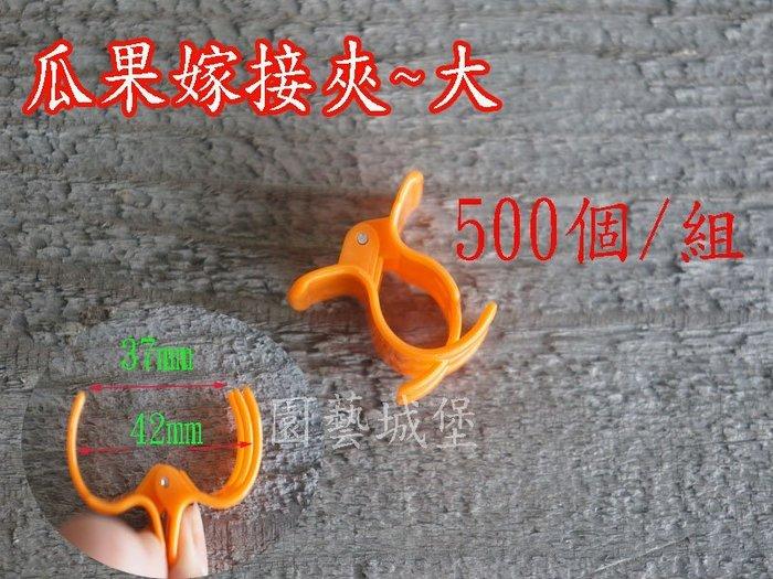 【園藝城堡】嫁接夾 果梗夾 番茄夾 瓜果嫁接夾(大) 固定夾500個/組