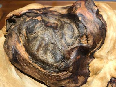 台灣檜木黃檜樹榴瘤