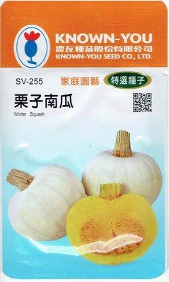 栗子南瓜 Winter Squash (sv-255) 【蔬菜種子】農友種苗特選種子 每包約6粒 果皮雪白
