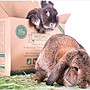 汪旺來【歡迎自取】摩米MOMI特級苜蓿草1kg(盒裝)35%高纖維質牧草/適合幼兔、龍貓、天竺鼠苜蓿