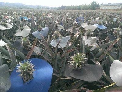 可重複使用10年-盆栽雜草剋星帽 鳳梨帽 鳳梨布 遮陽帽、防曬 耐用遮陽、透氣 不含水分 又不容易破